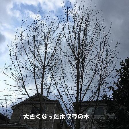 2017-03-07-3.jpg