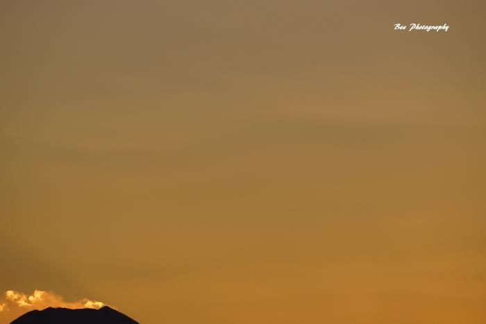 bee-富士山7839