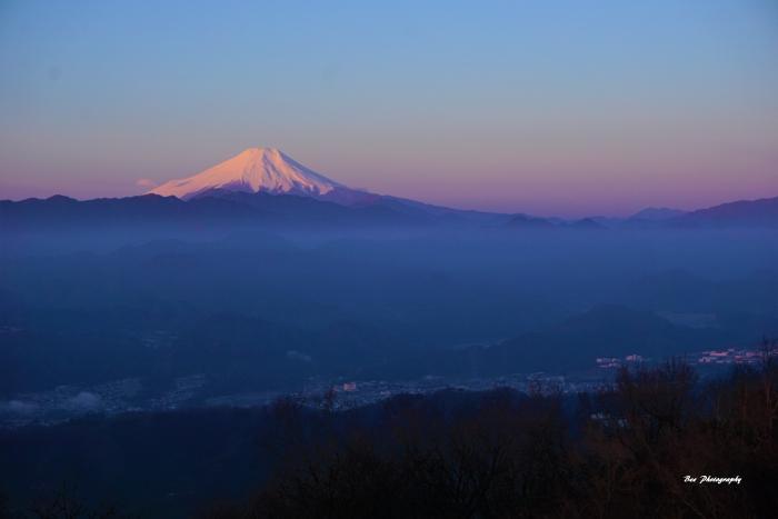 bee-富士山8426