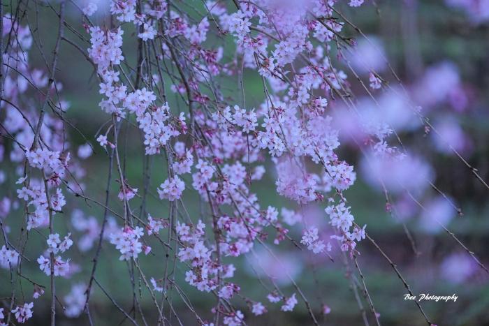 bee-栃谷戸公園0992