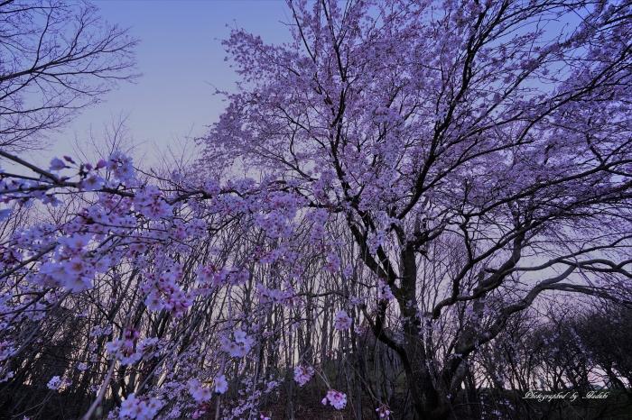 bee-栃谷戸公園0969-3