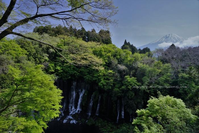 bee-白糸の滝2254