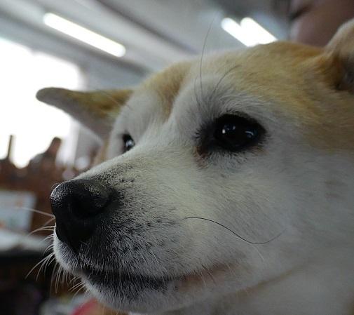 小梅ちゃんのひげ