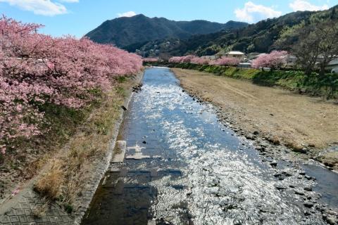 14河津桜ビューポイント