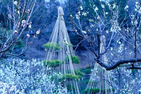 09薬師池公園紅白梅