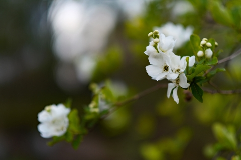 02武蔵小杉白い花