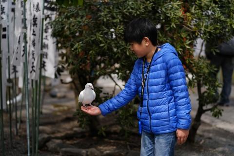 08少年と鳩