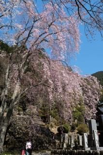 19久遠寺