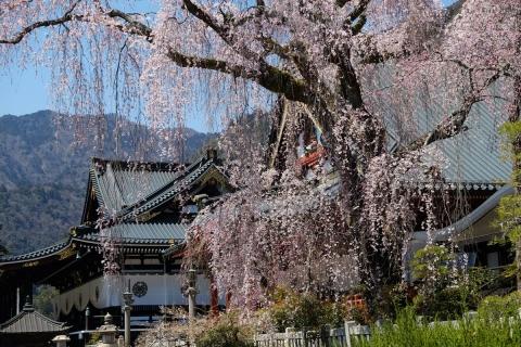 21久遠寺