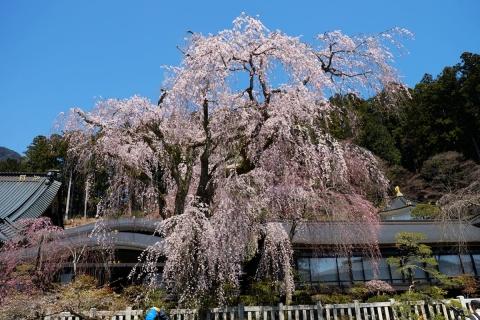 24久遠寺