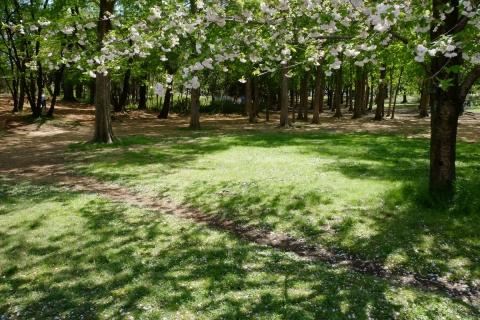 03武蔵野公園