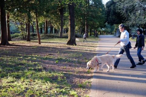 14砧公園