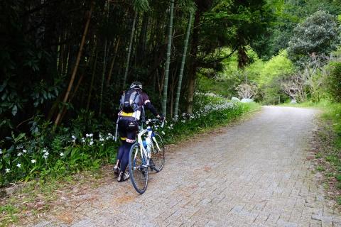 24宇津ノ谷明治のトンネルへ