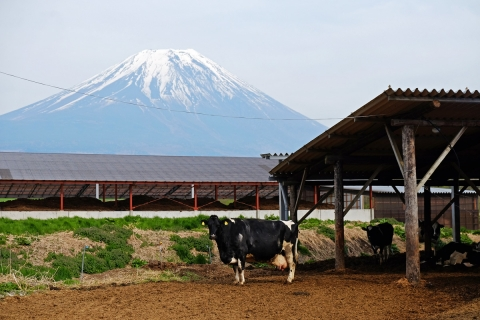 53a牛と富士山