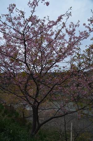 20170227佐久間ダム親水公園10