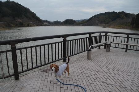 20170227佐久間ダム親水公園18