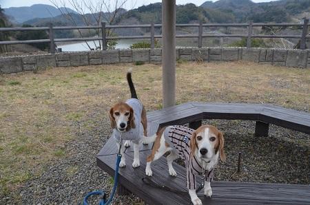 20170227佐久間ダム親水公園05