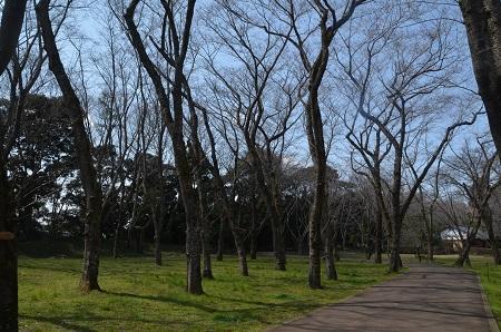20170328佐倉城址公園25