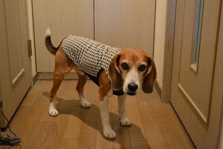 20170401犬服9612
