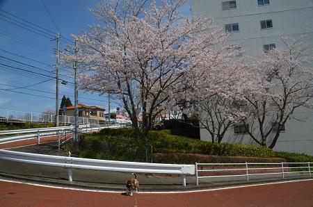 20170412佐倉城址公園01