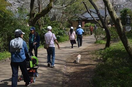 20170412佐倉城址公園30