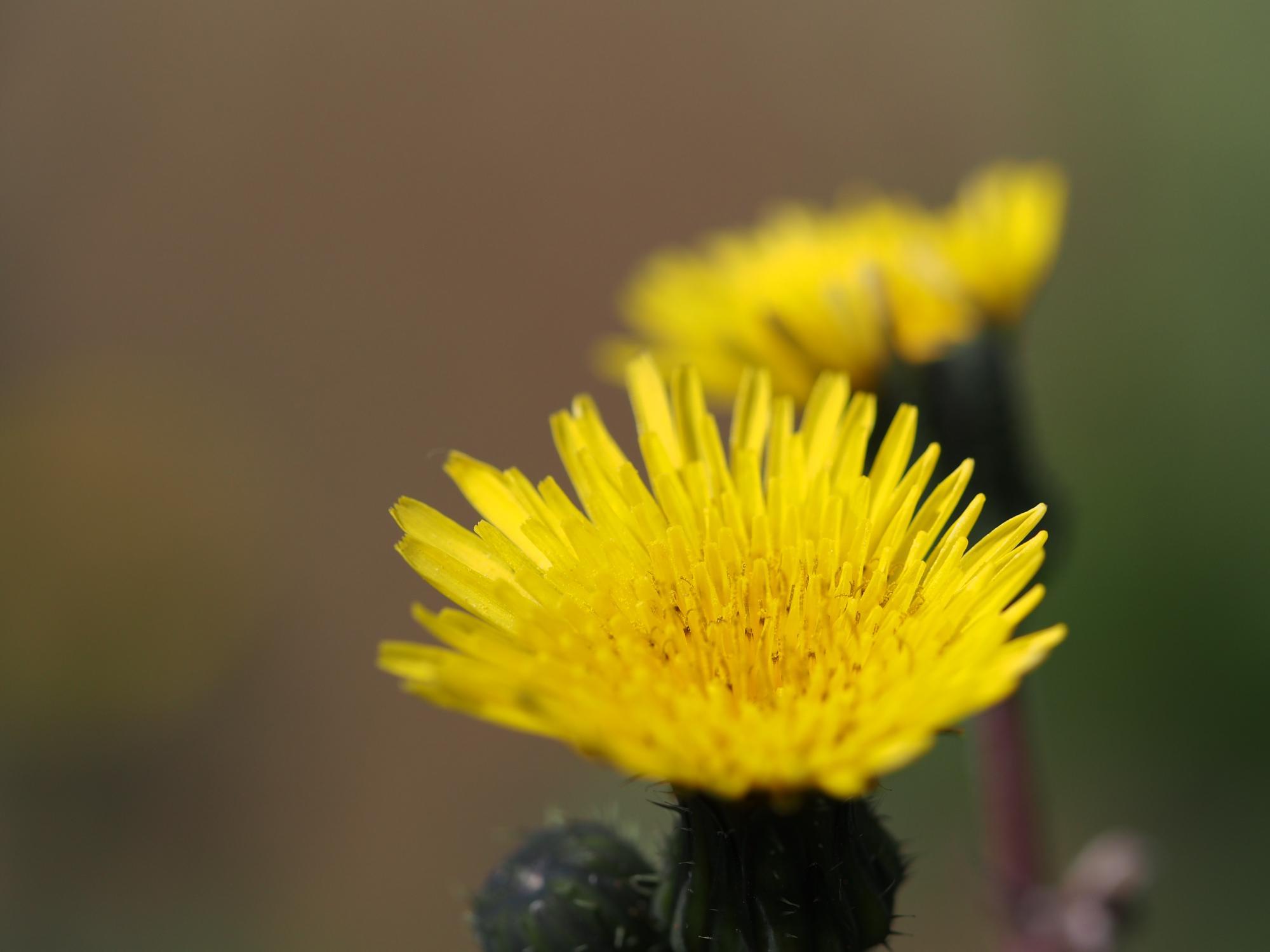 P3170014_黄色い花2