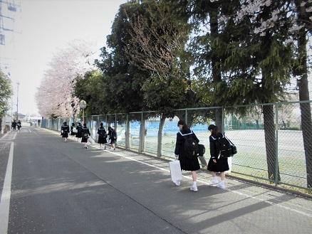 1 17.4.10 鴨川桜散歩と青柳個展 (7)