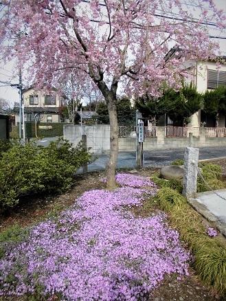 7 17.4.10 鴨川桜散歩と青柳個展 (34)