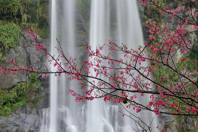 桜と滝(1)