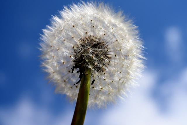 阿里山の花(4)