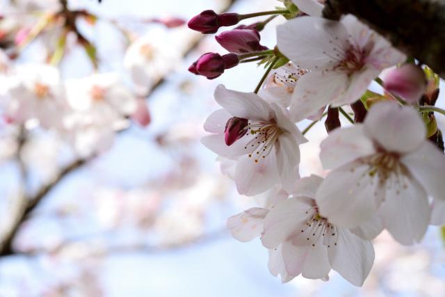 阿里山の花