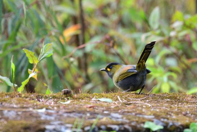 藪鳥(2)