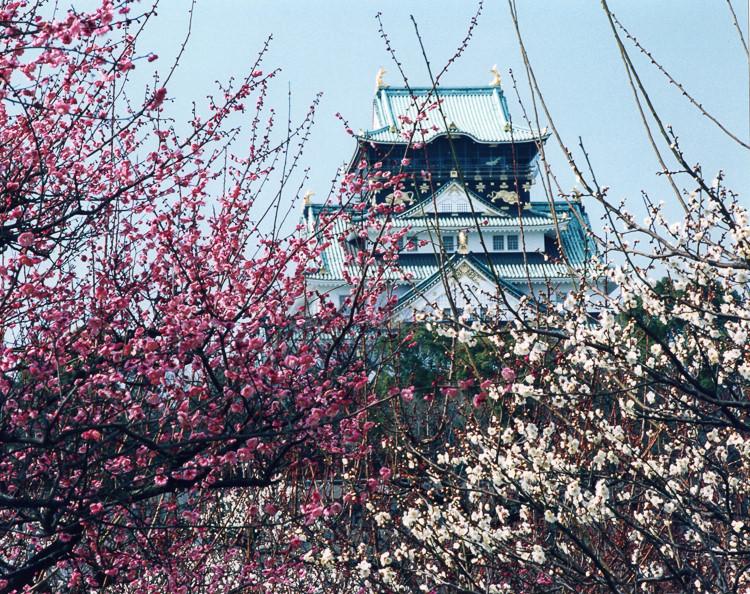 早春の大阪城