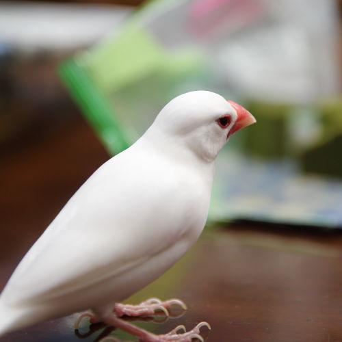 tabe kuru (3)