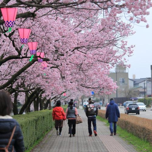 kojou sakura (3)