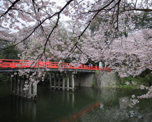 kojou sakura (5)
