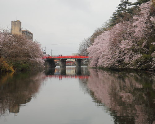 kojou sakura (4)