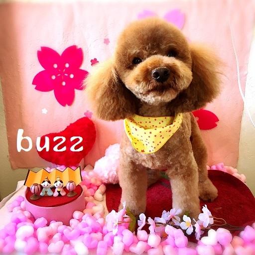 buzz 小橋