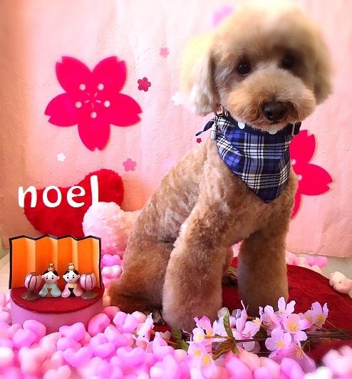 noel 中間