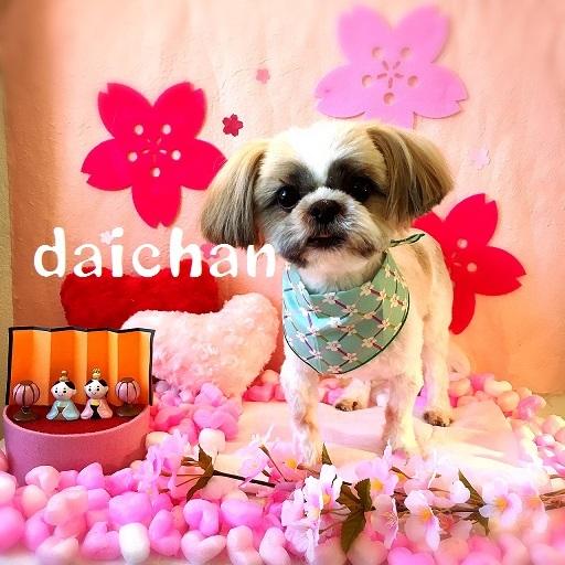 daichan 武智