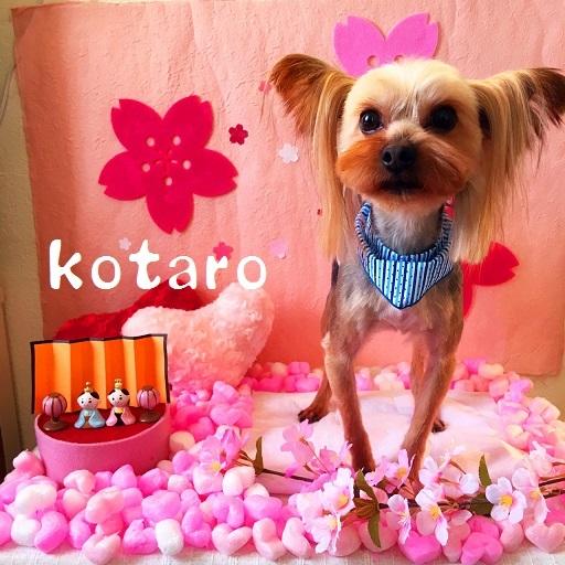 kotaro 大熊