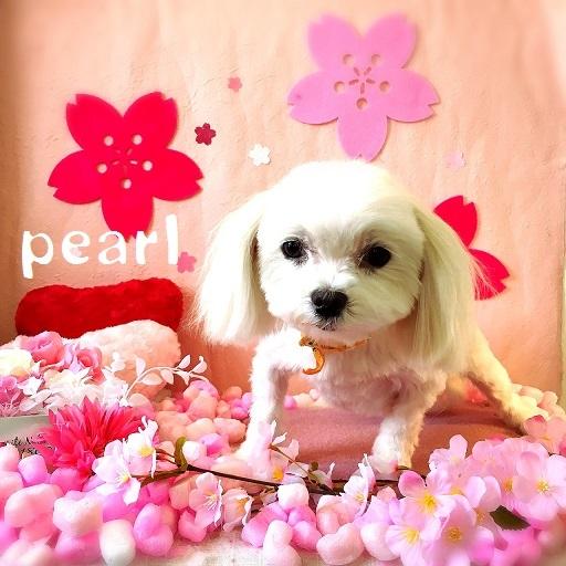pearl 黒岡