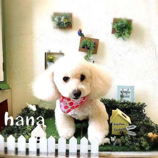 hana 笠