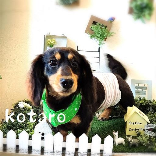 kotaro 三宅