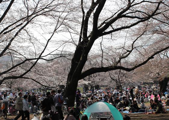 光が丘公園 広場のお花見