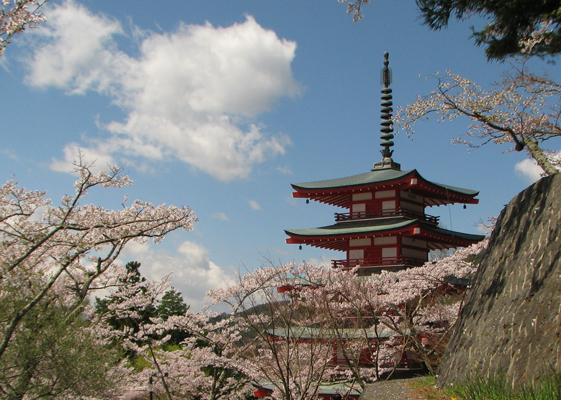 新倉山浅間公園の桜と五重塔