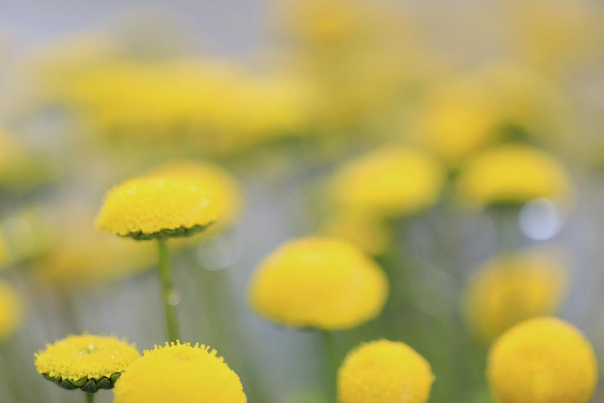 花ホタル1