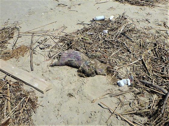 2017.04.23海辺の散歩は危険3