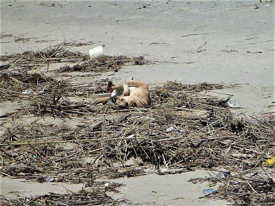 2017.04.23海辺の散歩は危険2