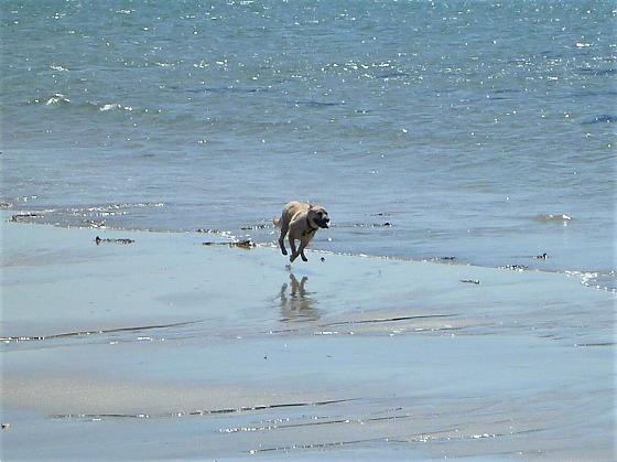 2017.04.23海辺の散歩は危険1